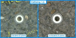 Cathsing 1.5